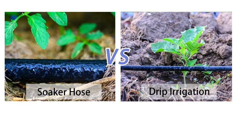 Soaker Hose vs Drip Irrigation