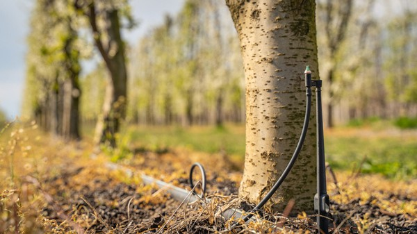 How to Use a Soaker Hose for Trees